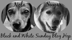 black-white-sunday-badge 2