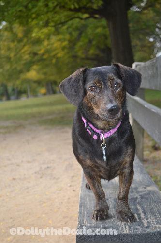 #DogWalkingWeek: Dolly's Walking Wrap Up
