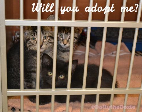 WWR Kittens