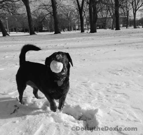 Winter Tips on Keeping Fit and Active with Your Dog
