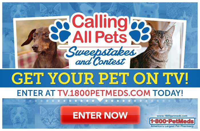 Calling all Pets — Be a TV Star!