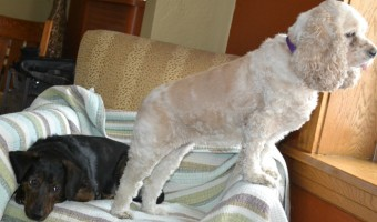 Can Two Totally Different Dogs Live Happily Ever After?