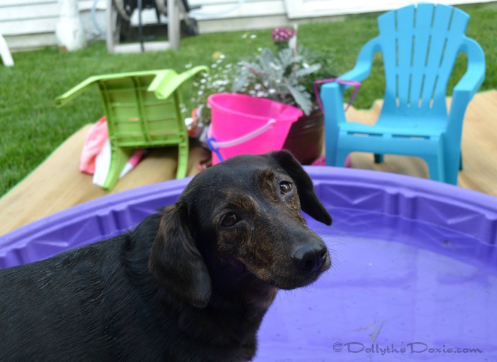 Dolly Pool Pawty