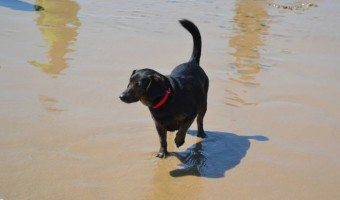 Dolly's Mischief at the Beach