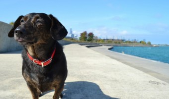 Walking Chicago's South Lakefront #DogWalkingWeek