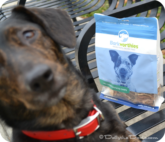 Dolly tries Barkworthies Sweet Potato Chips all natural dog treats.