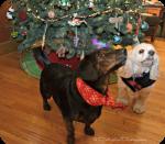 Christmas at Dolly's