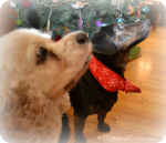 Dolly Waits for Santa