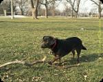 Dolly's Big Stick