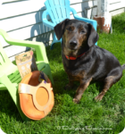 Outdoor Fun with Eco-Friendly Toys from Beco Pet