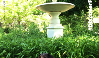 Dolly Visits Chopin Park #DiscoverPortagePark