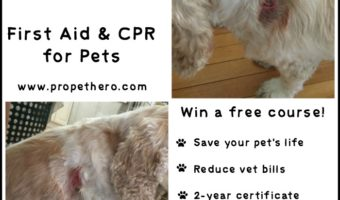 Learn Pet First Aid & CPR with ProPetHero #ad