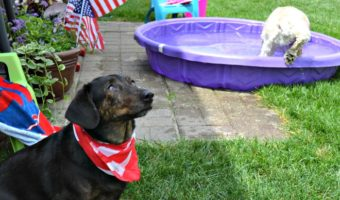 Photobombed on the 4th of July