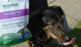 The Best Supplements for Dogs — Vet's Best #ad