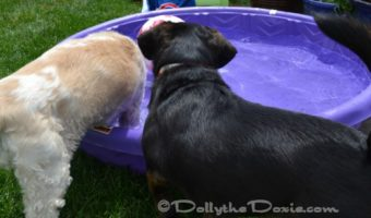 Stop the Scoot with earthbath® Tushy Wipes for Doggy Bottoms #ad