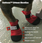 Dolly Goes Behind the Scenes with Saltsox™ Urban Booties