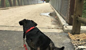 Dolly Takes on the New North Branch Trail Spur #NationalWalkYourDogWeek