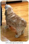 Pet Obesity: Costly to Pets and Pet Parents