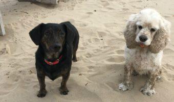 Last Call for the Dog Beach