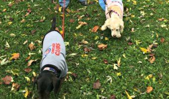 Halloween Dog Fun in Portage Park