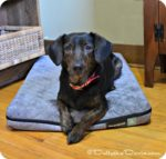Yogapet — Not Your Ordinary Dog Bed