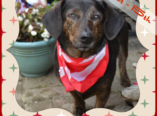 Dolly's Favorite Things Howliday Guide and Giveaway