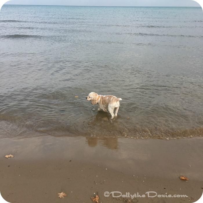 Taffy Montrose Dog Beach