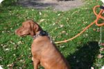 Tall Tails® — Authentic Pet Gear To Fit Your lifestyle
