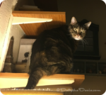 Cats in High Places
