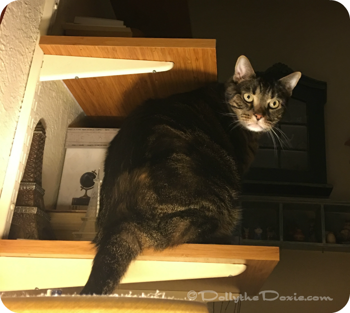 Cats in high places - Rhette