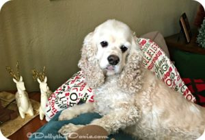 holiday health hazards for pets