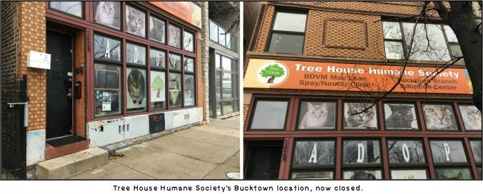 Tree House no cat cafe