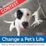 Help Save a Pet's Life in the New Year