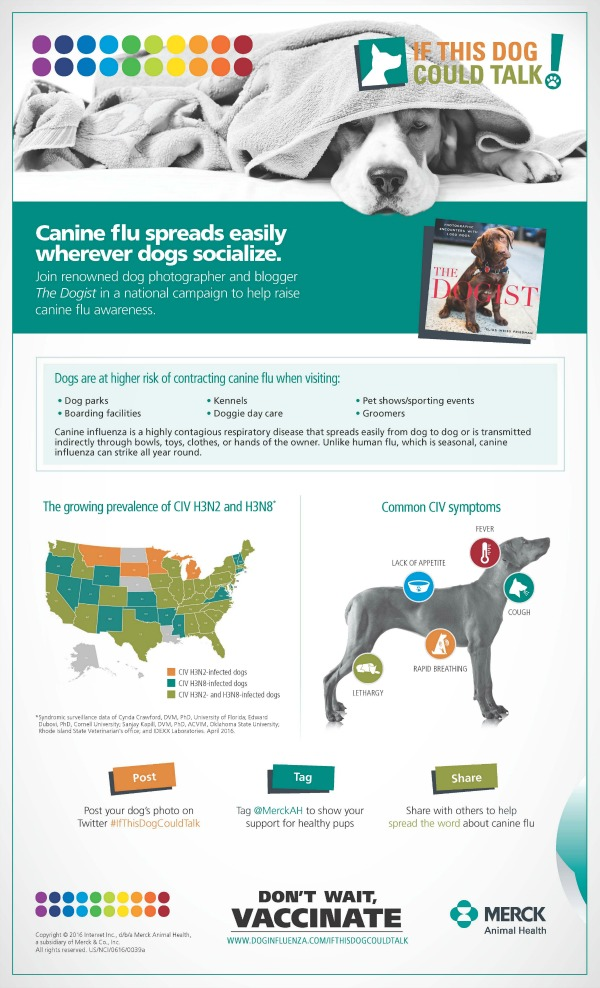 Dog flu and Canine Influenza symptoms/coverageDog flu and Canine Influenza symptoms/coverage