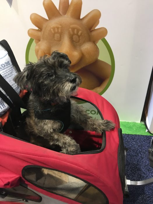 Oz the Terrier at Global Pet Expo 2017 Orange County Convention Center