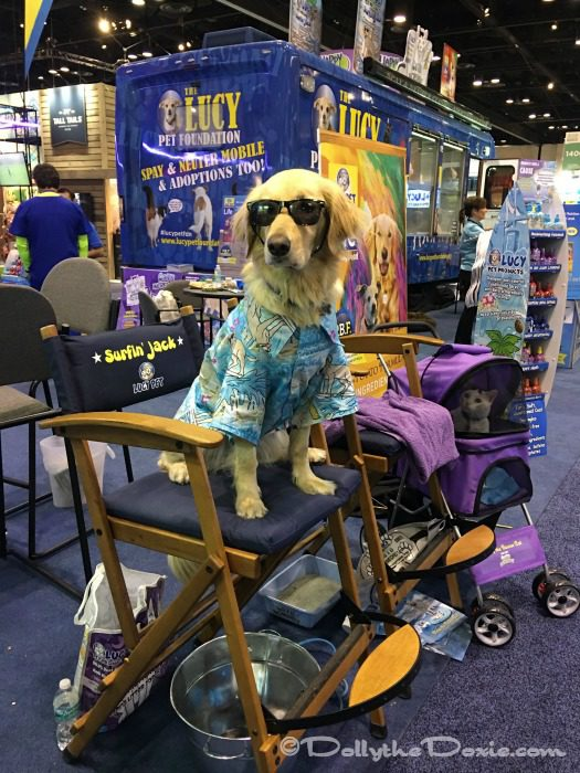 Jack from Lucy Pets at Global Pet Expo 2017 Orange County Convention Center