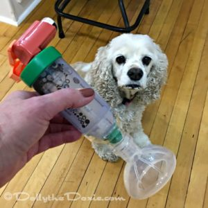 Using an inhaler to treat Chronic Bronchitis in dogs