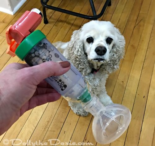 Living with Chronic Bronchitis in Dogs — Part II