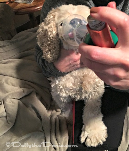 How To Get A Dog To Use An Inhaler