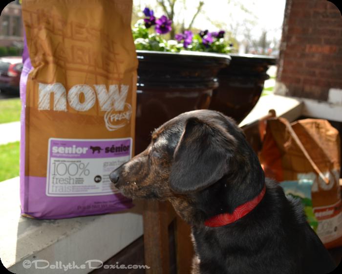 Petcurean Vegan diet for dogs-senior cat food