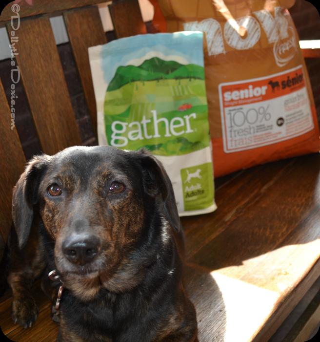 Petcurean Vegan diet for dogs-gather
