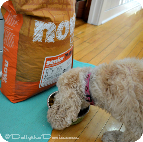 Petcurean Vegan diet for dogs-GATHER or NOW FRESH for senior dogs
