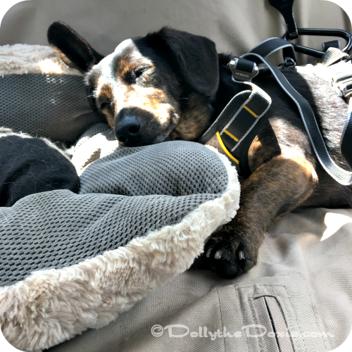 Long car rides with dogs -- keep them safe and comfortable