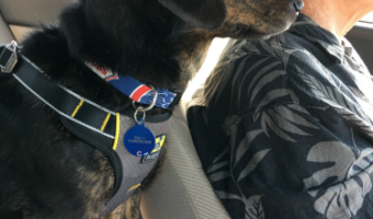 Long Car Rides with Dogs — 3 Tips to Keep Them Safe & Comfortable
