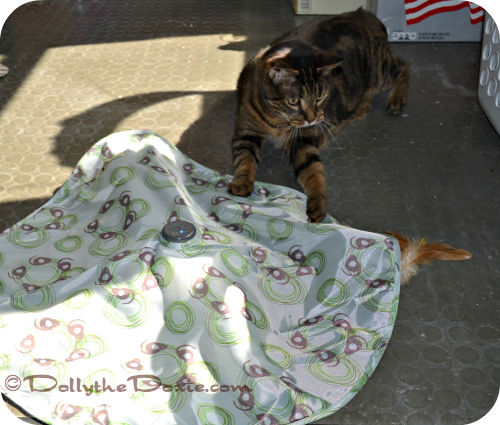 Mystery Motion cat toys to keep cats active by Petlinks
