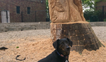 A Tree Carved in Portage Park