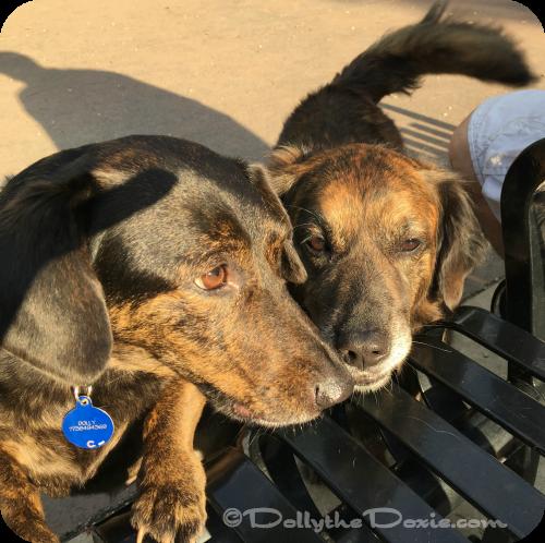 Dolly the protector - dog jobs