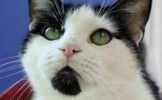 Tree House Humane Society: Is a No-Kill Animal Shelter Really No Kill?