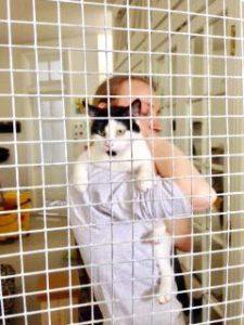 Tree House Humane Society: Is a No -Kill Animal Shelter Really No Kill?