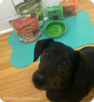 Looking for safe, healthy, affordable pet products? Try Loving Pets®! #ad
